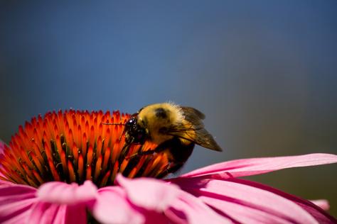 Photo Credit: David July --- , Mount Vernon, Virginia: 04 July 2014